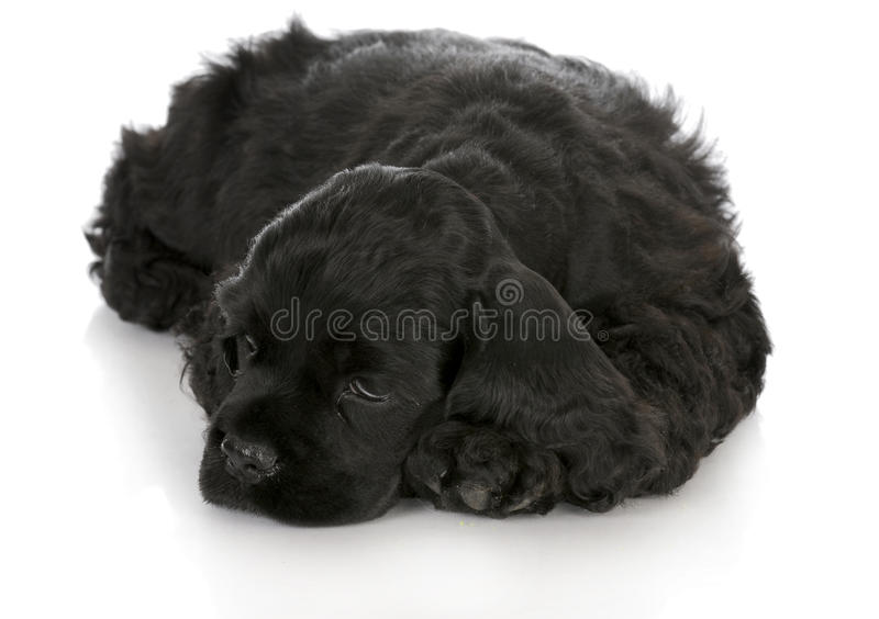 Chiot mignon photos stock