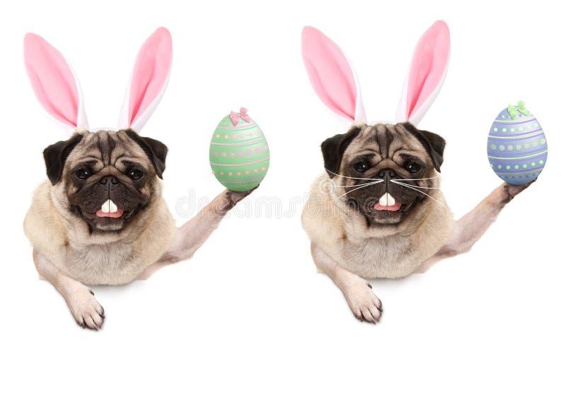 Chiot mignon de roquet avec le diadème d'oreilles de lapin, supportant l'oeuf de pâques accrochant avec des pattes sur la bannièr photographie stock libre de droits