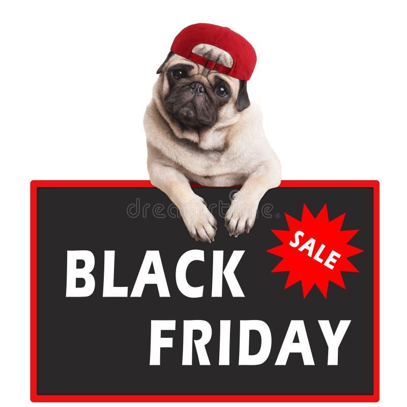 Chiot mignon de roquet utilisant le chapeau rouge et accrochant avec des pattes sur le signe avec le noir vendredi des textes, su photographie stock libre de droits