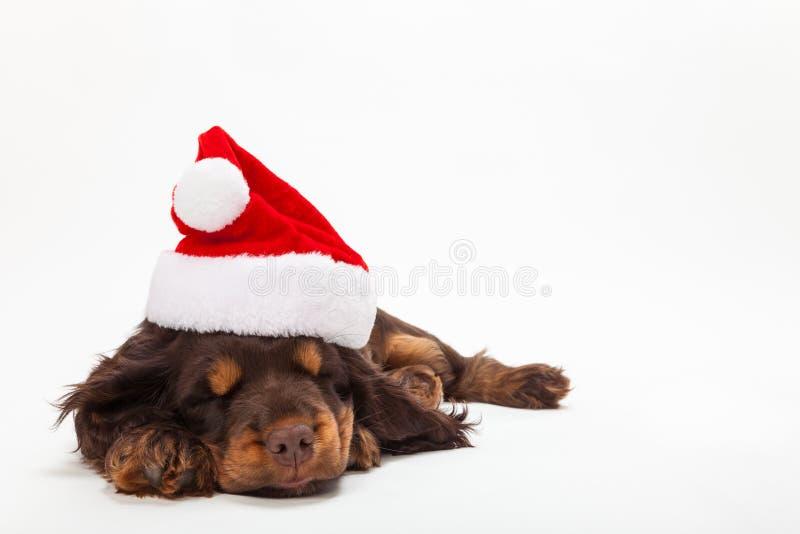 Chiot mignon Santa Hat de port de sommeil d'épagneul image libre de droits