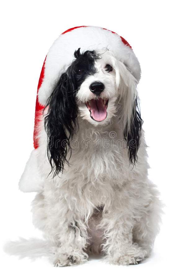 Chiot mignon utilisant un chapeau de Santa.   images stock