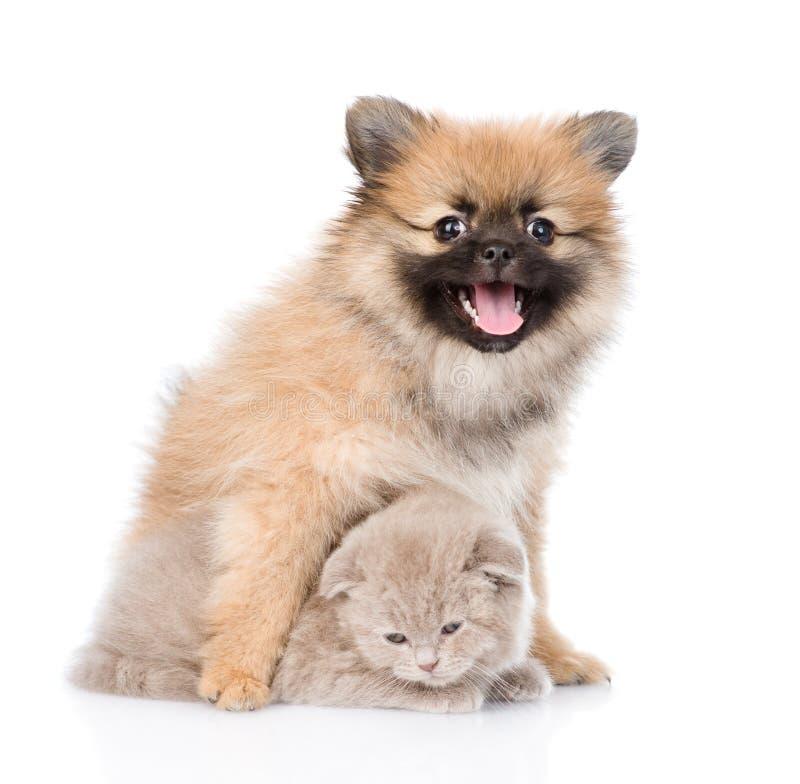 Chiot minuscule de spitz étreignant le chaton écossais sur le blanc photographie stock