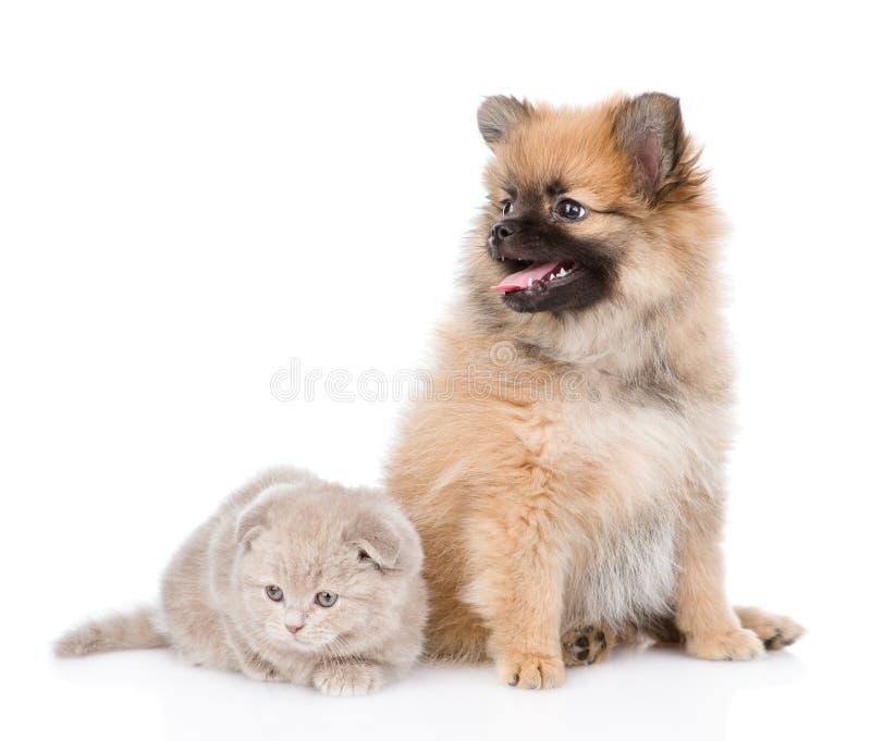 Chiot minuscule de spitz se reposant avec le chaton écossais ensemble D'isolement photos libres de droits