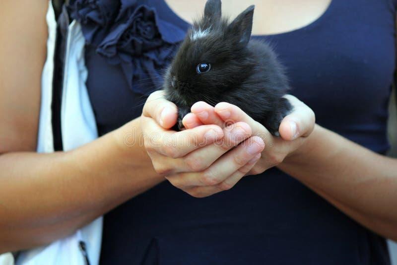 Chiot noir d'animal familier de lapin beau photo libre de droits