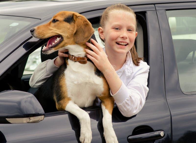 Chiot smilling heureux de fille et de briquet se reposant dans la voiture photos libres de droits