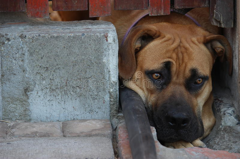 Chiot triste image stock