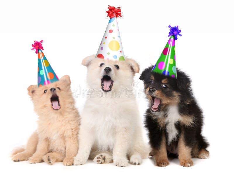 Chiots chantant la chanson de joyeux anniversaire image libre de droits