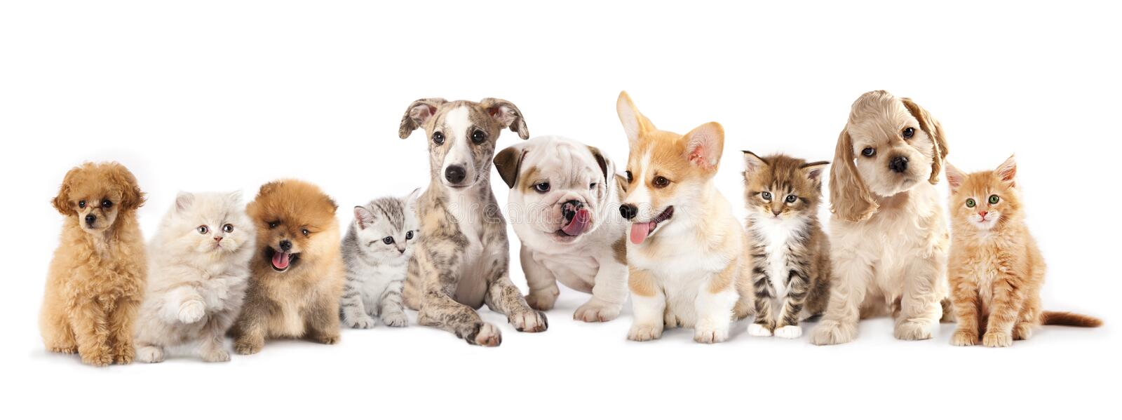 Chiots et chatons photos stock