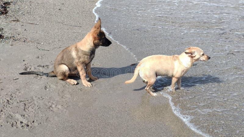 Chiots jouant heureusement en mer photographie stock libre de droits