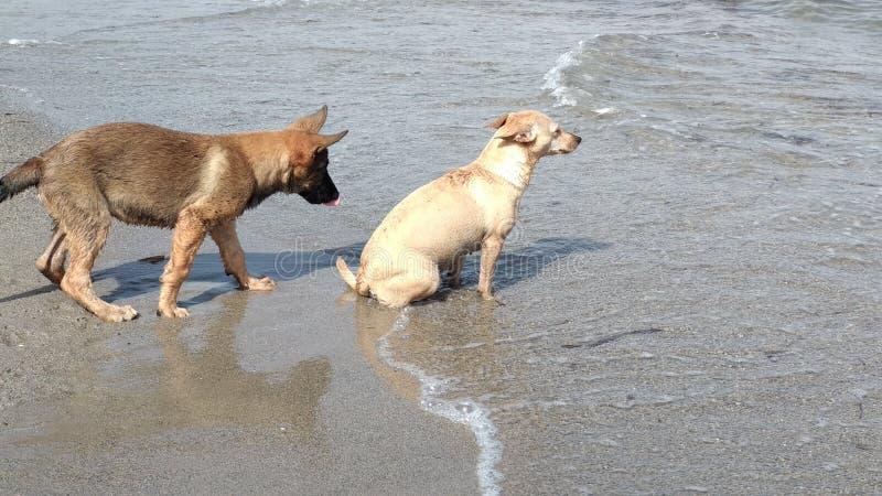 Chiots jouant heureusement en mer photographie stock