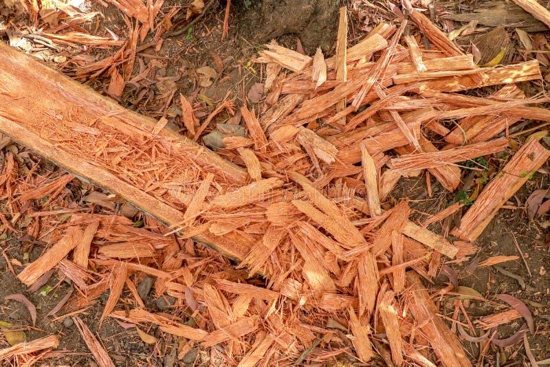 Chip del Palmwood Trucioli di legno da un tronco di albero lavorato Un ceppo con una scanalatura vuota Lavoro manuale nei dei car fotografie stock