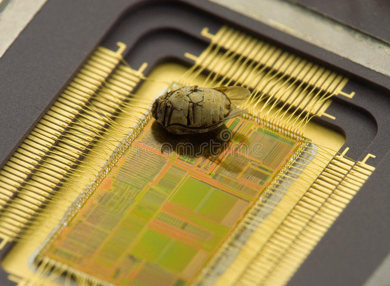 Chip's Bug. Dead bug on chip stock photography