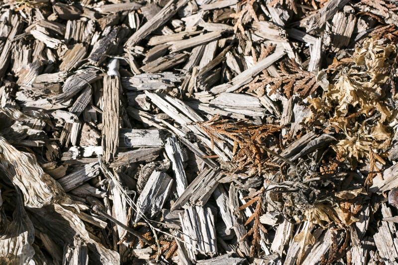 Chip Texture Mixed de madeira áspero com Foilage inoperante fotos de stock