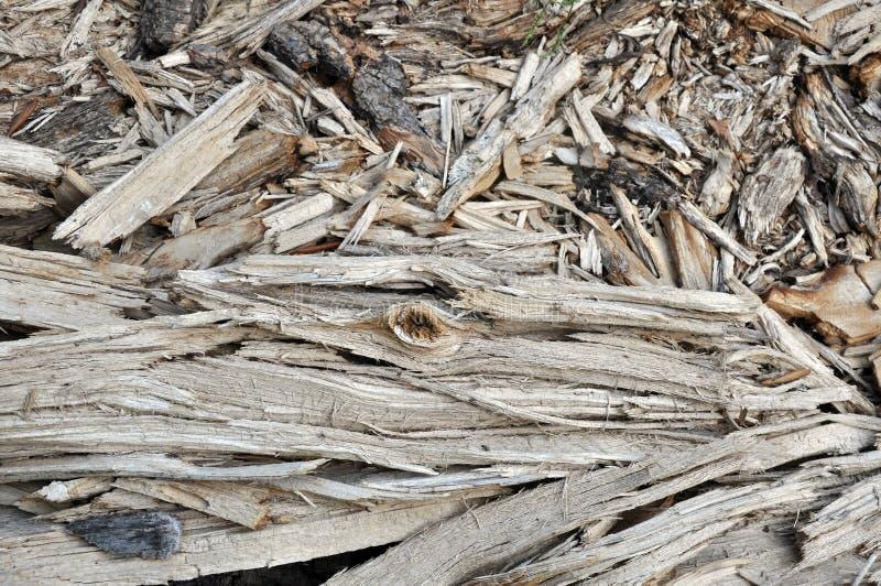 Chiper av ett ruttet träd arkivbilder