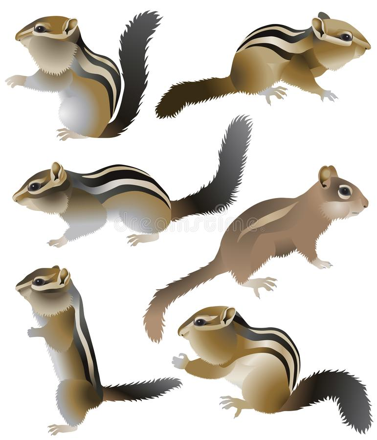 chipmunk royalty illustrazione gratis