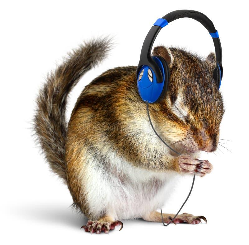 Chipmunk divertido que escucha la música en los auriculares fotografía de archivo