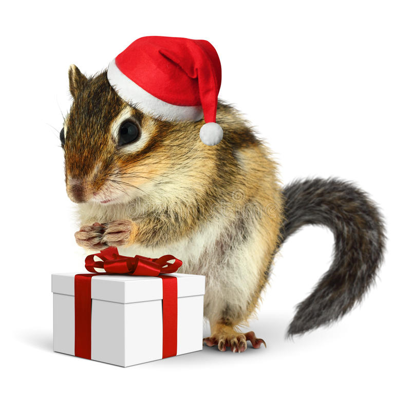 Chipmunk no chapéu vermelho de Papai Noel com caixa de presente fotografia de stock