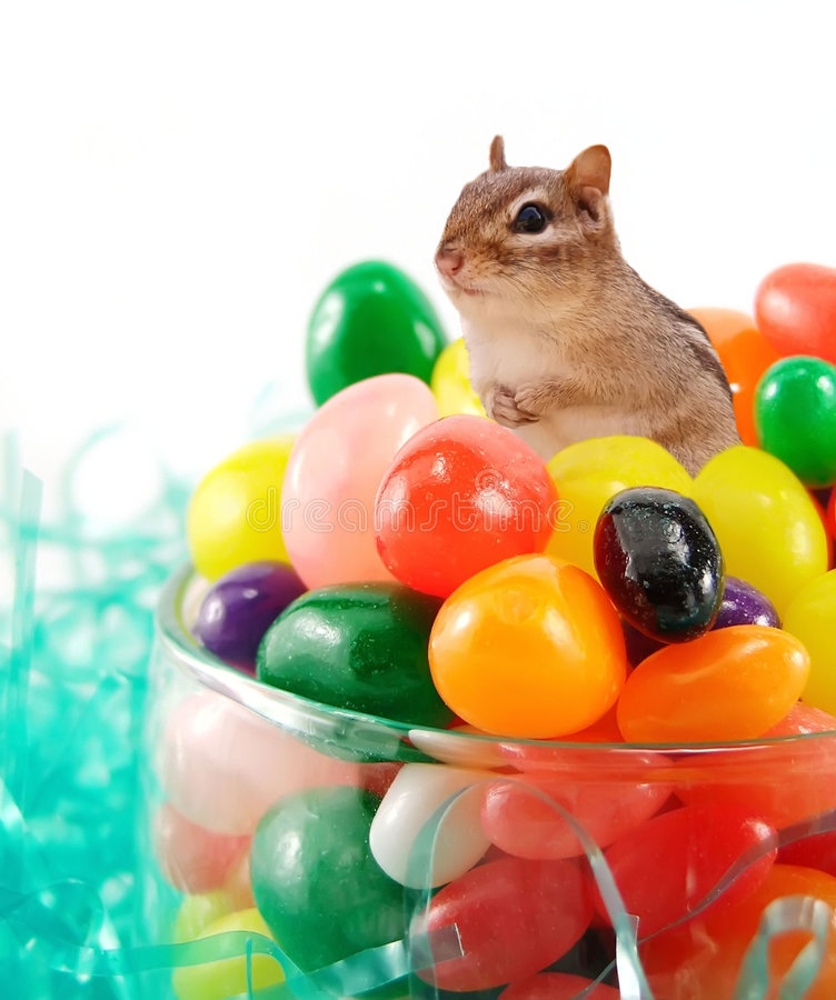 Chipmunk nos jellybeans fotos de stock royalty free