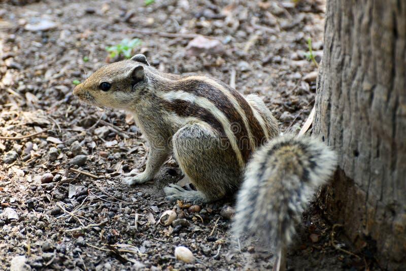 Download Chipmunk stock image. Image of funny, amusing, tree, wildlife - 30620723