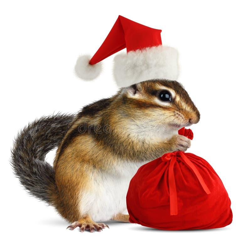Chipmunk in red Santa Claus hat with Santas bag stock image