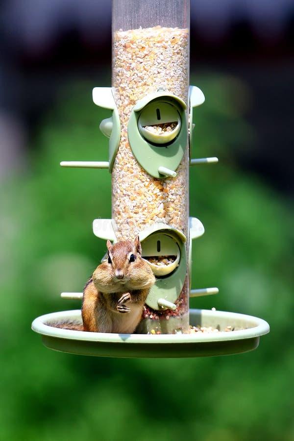 Chipmunk su un alimentatore dell'uccello immagini stock