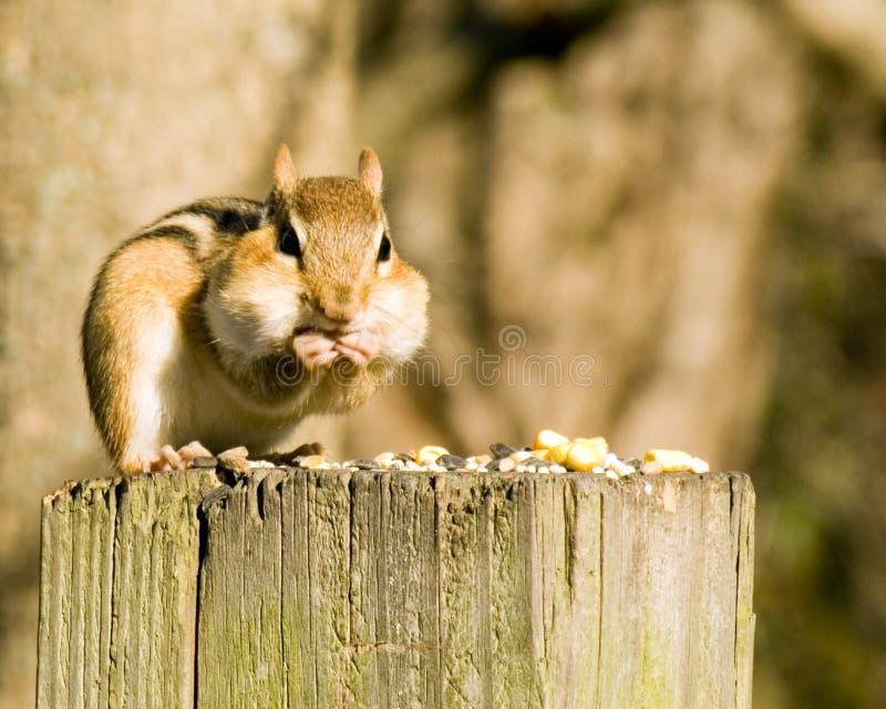 Download Chipmunk sur un poteau photo stock. Image du poteau, graines - 8661972