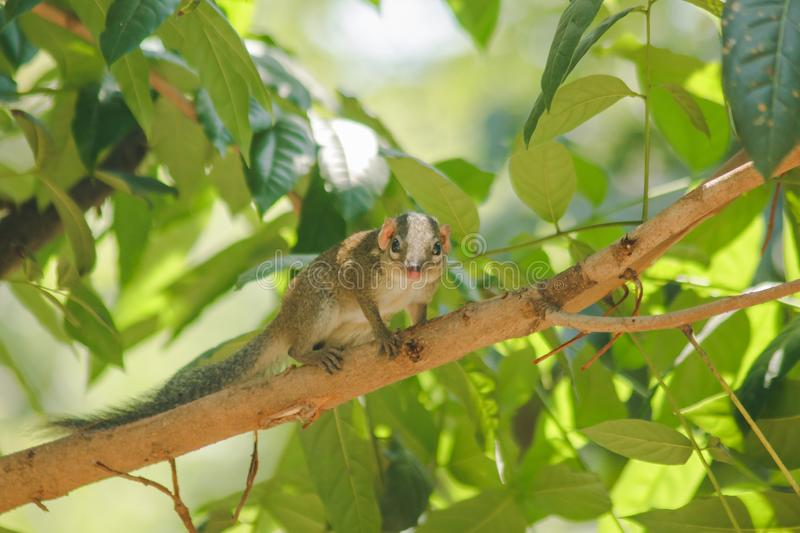 Chipmunk is on a tree with small mammals. Has a general appearance similar to squirrels stock photos