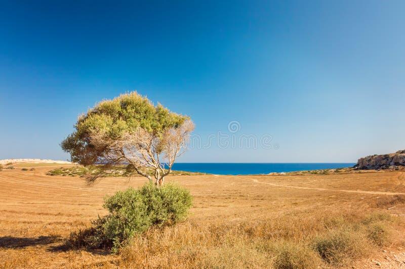 Chipre Ayia Napa, península de Greco do cabo, Forest Park nacional imagem de stock