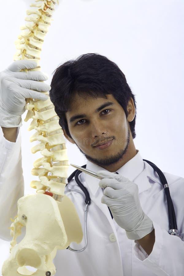chiropractic γιατρός στοκ εικόνες