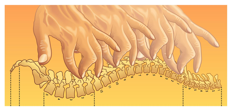 chiropractic illustrazione vettoriale