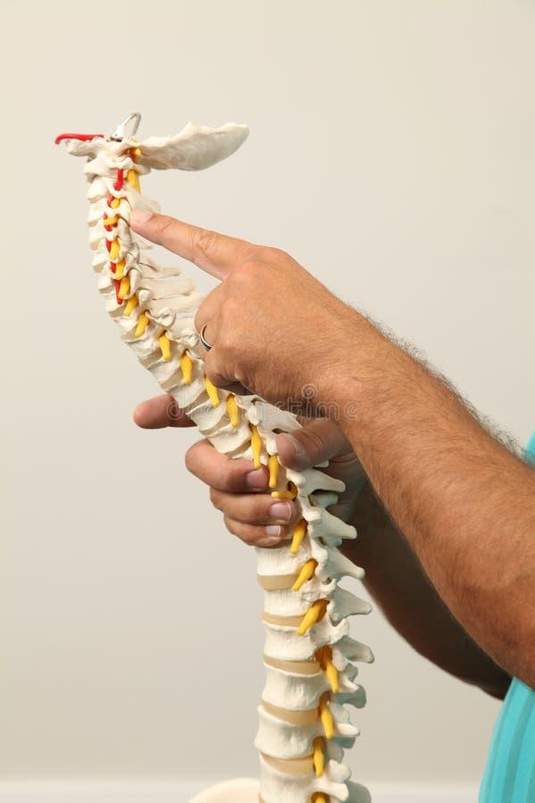 chiropractor fotos de stock