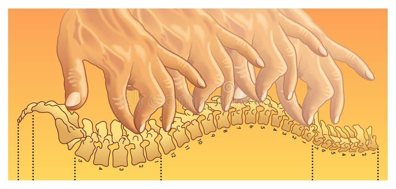 chiropraktijk vector illustratie