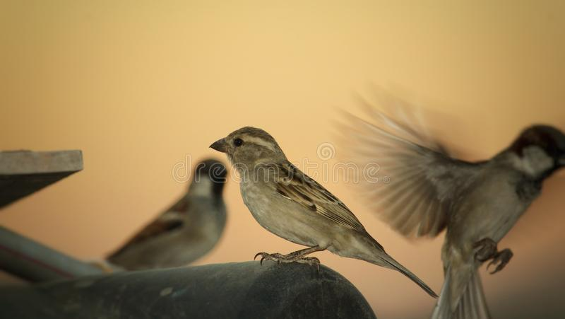 Chirping Stock Images - Download 1,177 Royalty Free Photos