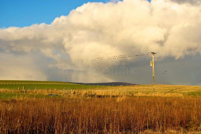 Chirping birds on the farm royalty free stock photo