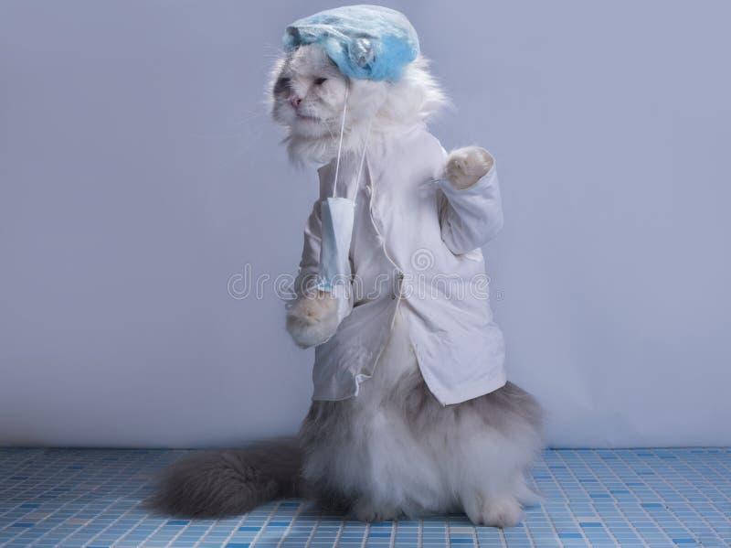 Chirurgien de costume de chat se préparant à la chirurgie photo stock