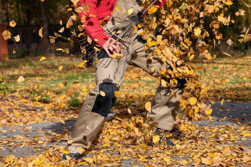 Chitarra del rastrello di autunno fotografie stock libere da diritti