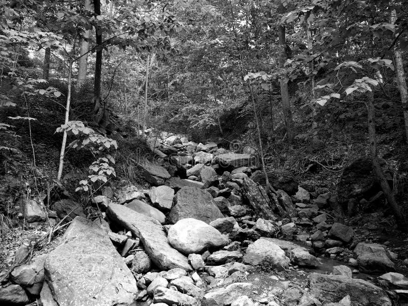 Chittenango понижается поток фидера парка штата черно-белый стоковые фото