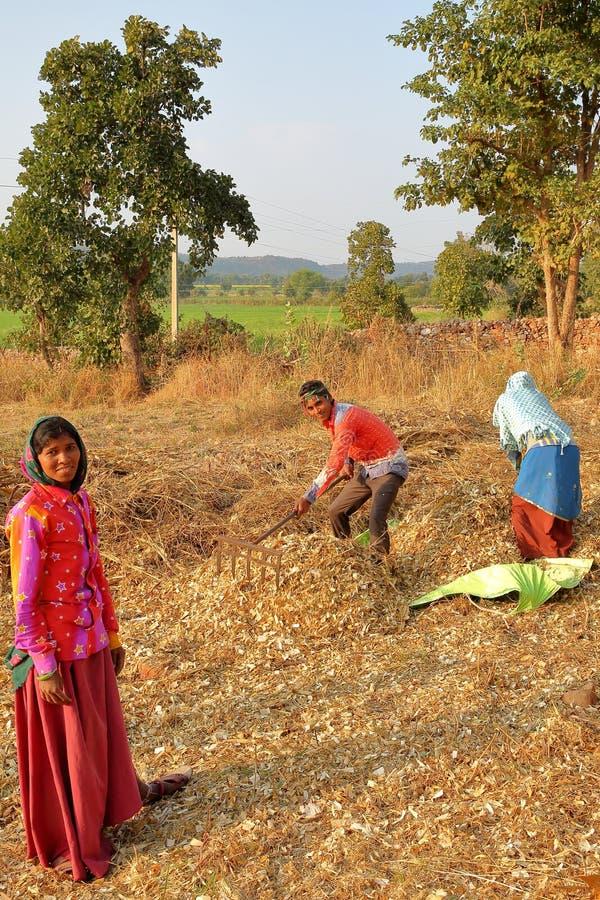 CHITTORGARH, РАДЖАСТХАН, ИНДИЯ - 13-ОЕ ДЕКАБРЯ 2017: Конец-вверх на фермерах работая в полях и подготавливая stover мозоли в coun стоковое изображение rf