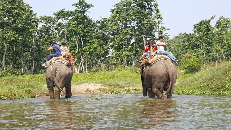 Chitwan national park stock image