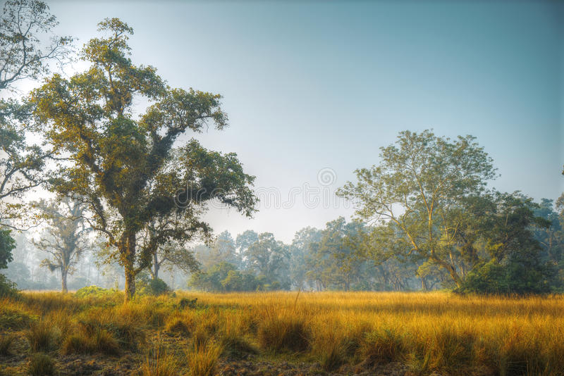 Chitwan National Park. The park is 932 sq. km, is mainly covered by jungle royalty free stock image