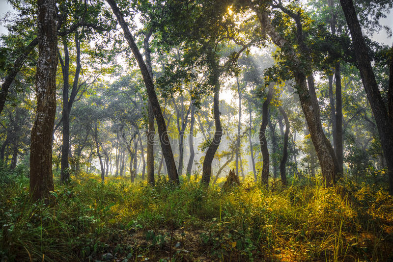 Chitwan National Park. The park is 932 sq. km, is mainly covered by jungle stock photo