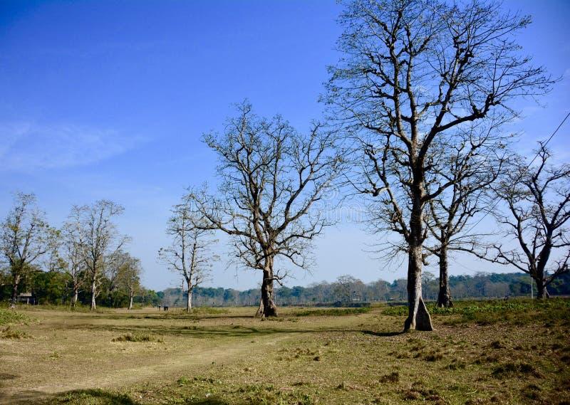 chitwan nationalpark royaltyfria foton