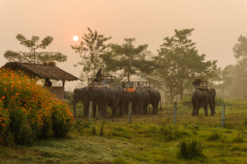 CHITWAN, NEPAL - OCTOBER 27, 2014: Elephants waiting for Elephant safari tour on the lawn Chitwan National Park.Chitwan National. CHITWAN, NEPAL - OCTOBER 27 stock photo