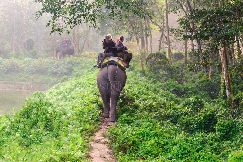 CHITWAN, NEPAL - OCTOBER 27, 2014: Elephants walking on the lawn at Elephant safari tour Chitwan National Park.Chitwan National Pa. CHITWAN, NEPAL - OCTOBER 27 stock image