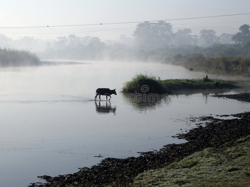 chitwan park narodowy fotografia royalty free