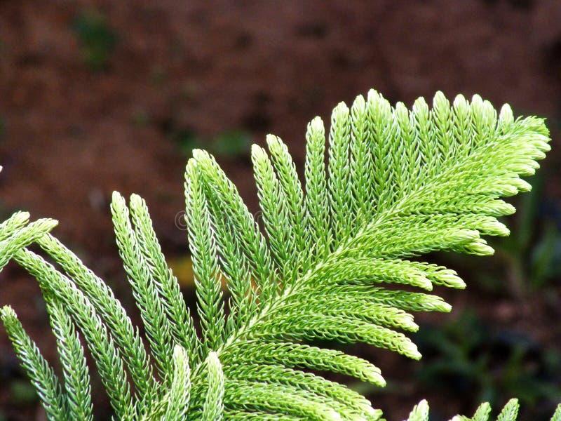 Chiuda aumenta le foglie fotografia stock