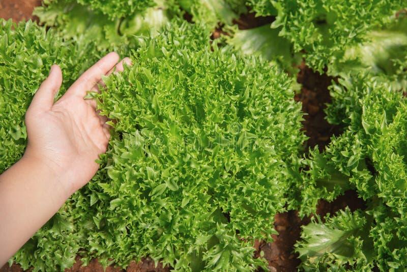 Chiuda la mano dell'agricoltore nel giardino durante l'ora di colazione fotografia stock libera da diritti