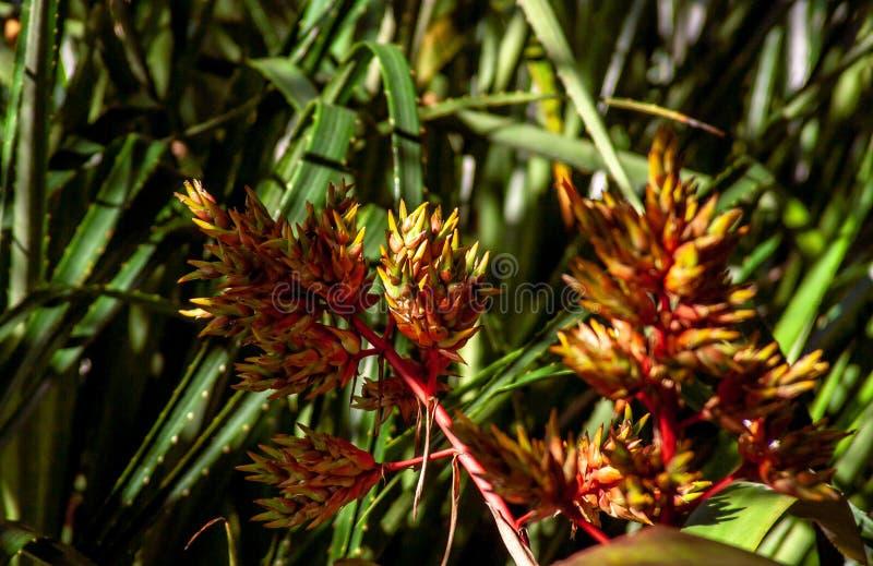 Chiuda su da un fiore esotico fotografie stock libere da diritti