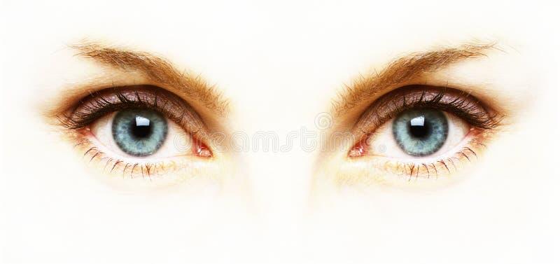 Chiuda su degli occhi azzurri su fondo bianco fotografia stock libera da diritti