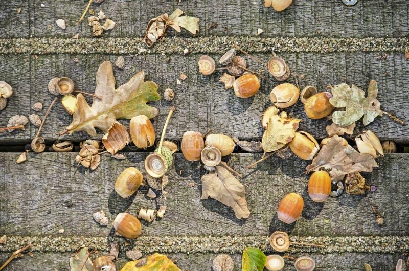 Chiuda su dei dadi e delle foglie del faggio fotografia stock